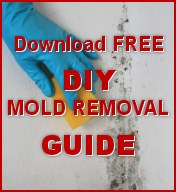 Free Mold Removal Guide